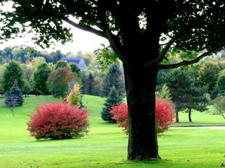 Image for Maple Hills Golf Course
